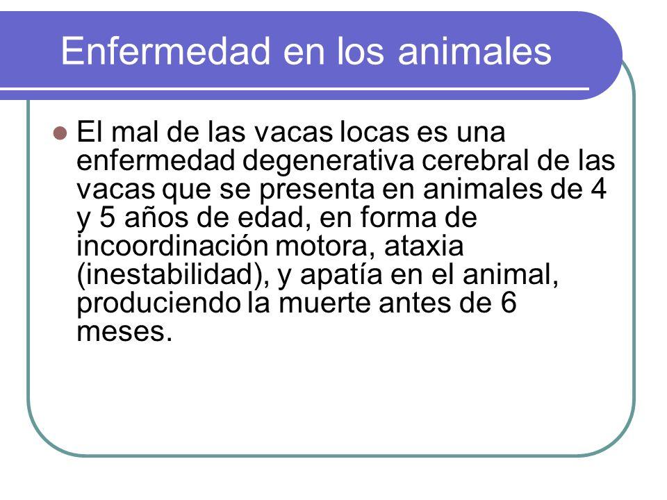 Enfermedad en los animales El mal de las vacas locas es una enfermedad degenerativa cerebral de las vacas que se presenta en animales de 4 y 5 años de