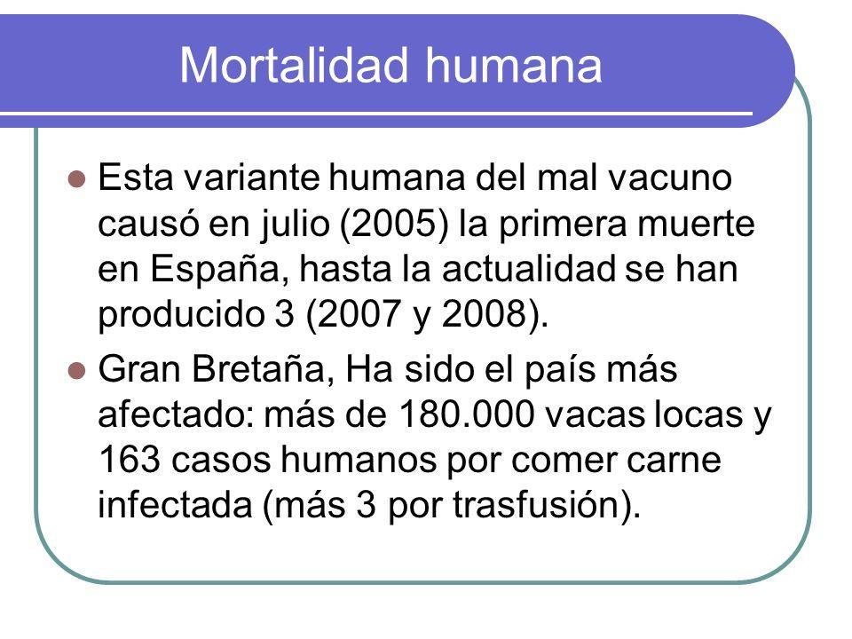 Mortalidad humana Esta variante humana del mal vacuno causó en julio (2005) la primera muerte en España, hasta la actualidad se han producido 3 (2007