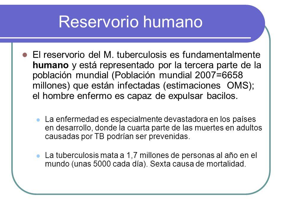 Reservorio humano El reservorio del M. tuberculosis es fundamentalmente humano y está representado por la tercera parte de la población mundial (Pobla