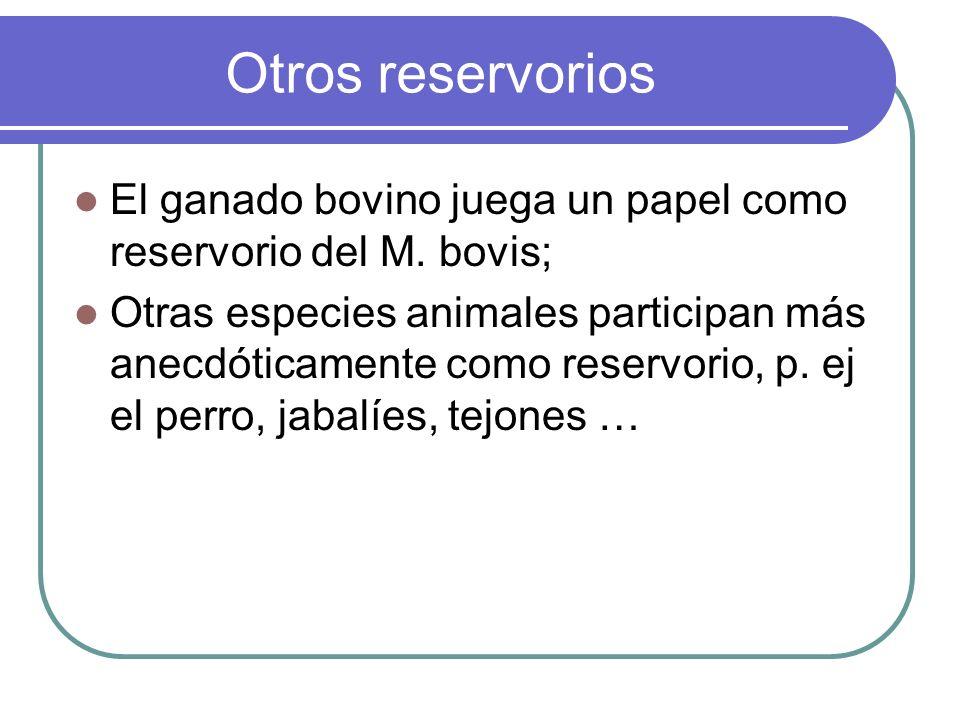 Otros reservorios El ganado bovino juega un papel como reservorio del M. bovis; Otras especies animales participan más anecdóticamente como reservorio
