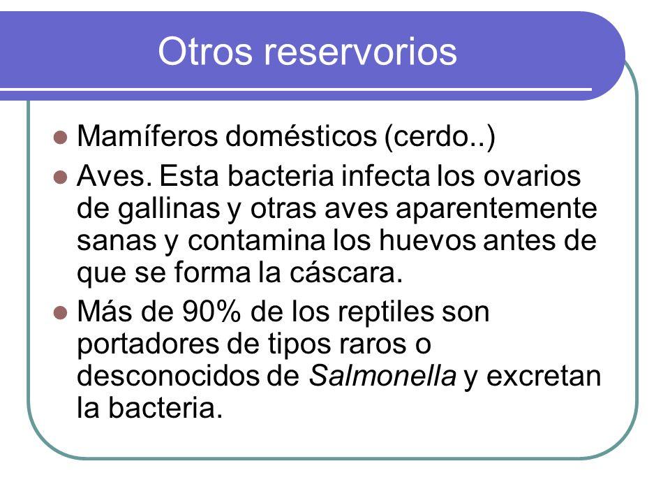 Otros reservorios Mamíferos domésticos (cerdo..) Aves. Esta bacteria infecta los ovarios de gallinas y otras aves aparentemente sanas y contamina los