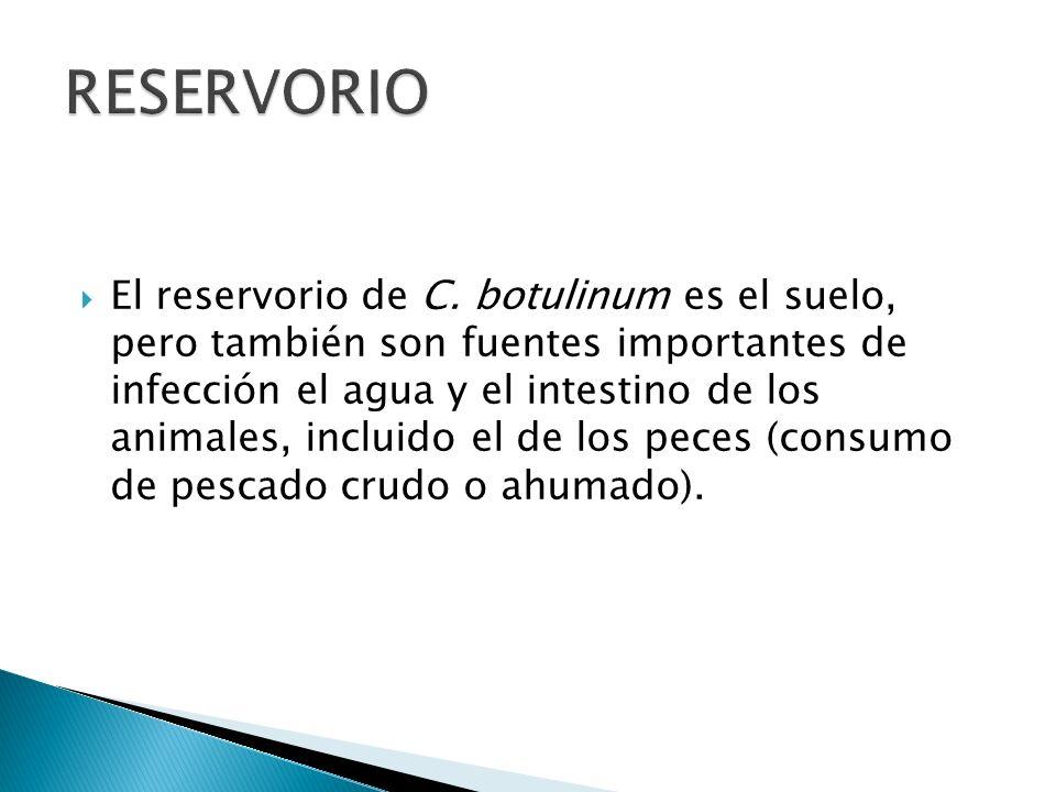 El reservorio de C. botulinum es el suelo, pero también son fuentes importantes de infección el agua y el intestino de los animales, incluido el de lo