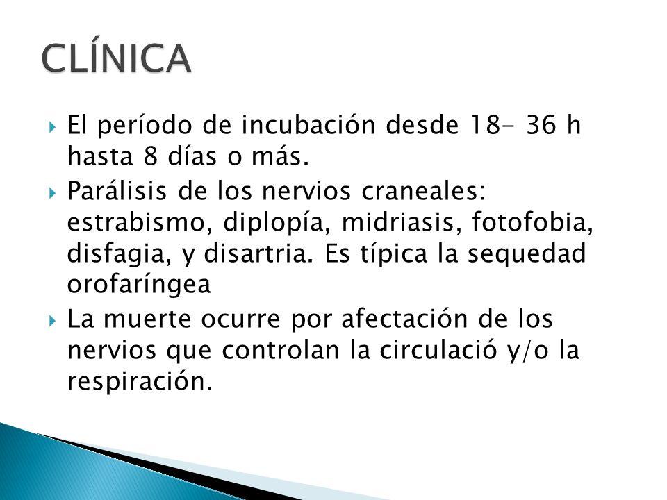 El período de incubación desde 18- 36 h hasta 8 días o más. Parálisis de los nervios craneales: estrabismo, diplopía, midriasis, fotofobia, disfagia,