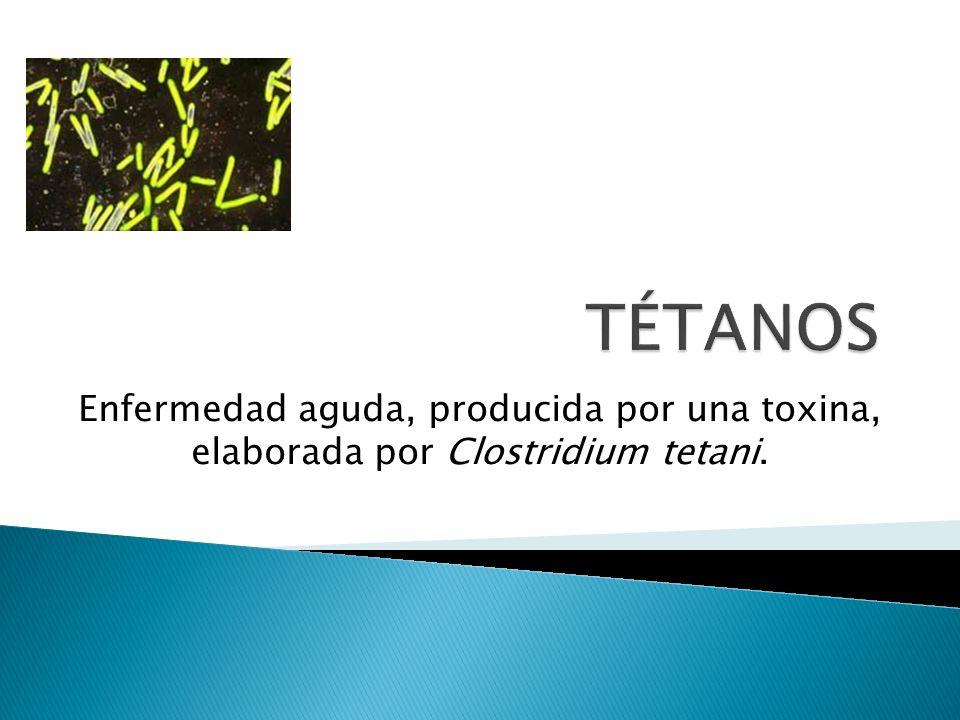 Enfermedad aguda, producida por una toxina, elaborada por Clostridium tetani.