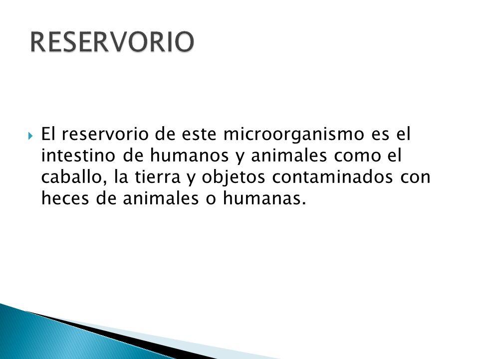 El reservorio de este microorganismo es el intestino de humanos y animales como el caballo, la tierra y objetos contaminados con heces de animales o h