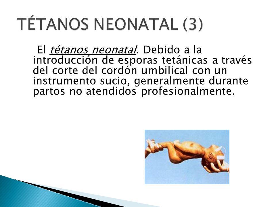 El tétanos neonatal. Debido a la introducción de esporas tetánicas a través del corte del cordón umbilical con un instrumento sucio, generalmente dura