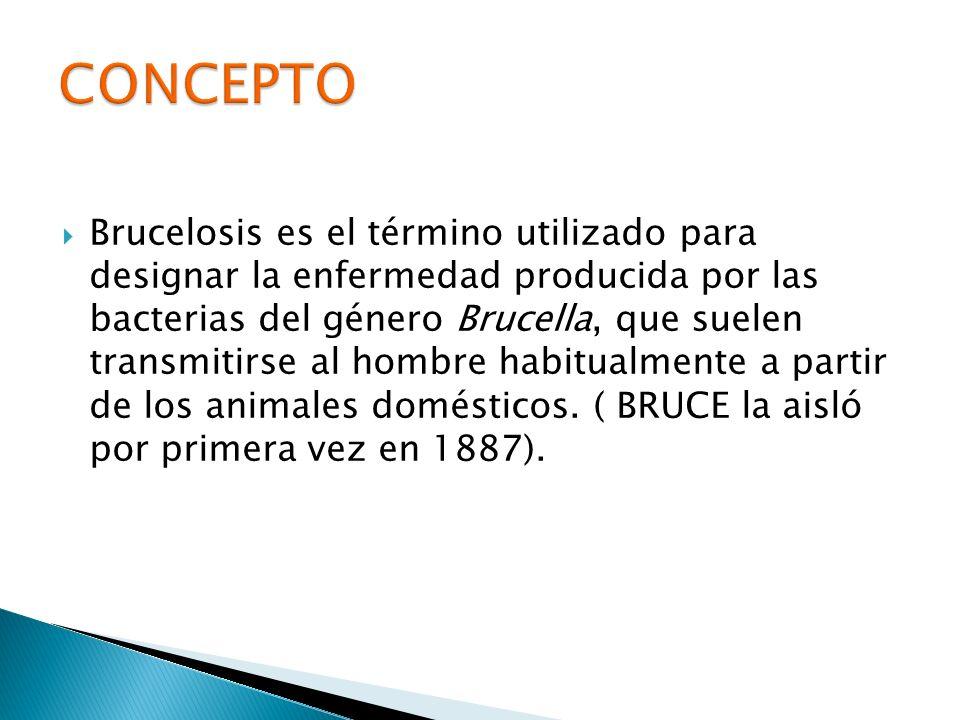 Brucelosis es el término utilizado para designar la enfermedad producida por las bacterias del género Brucella, que suelen transmitirse al hombre habi