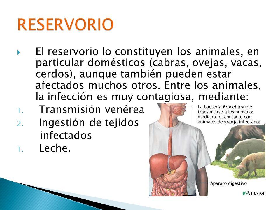 El reservorio lo constituyen los animales, en particular domésticos (cabras, ovejas, vacas, cerdos), aunque también pueden estar afectados muchos otro