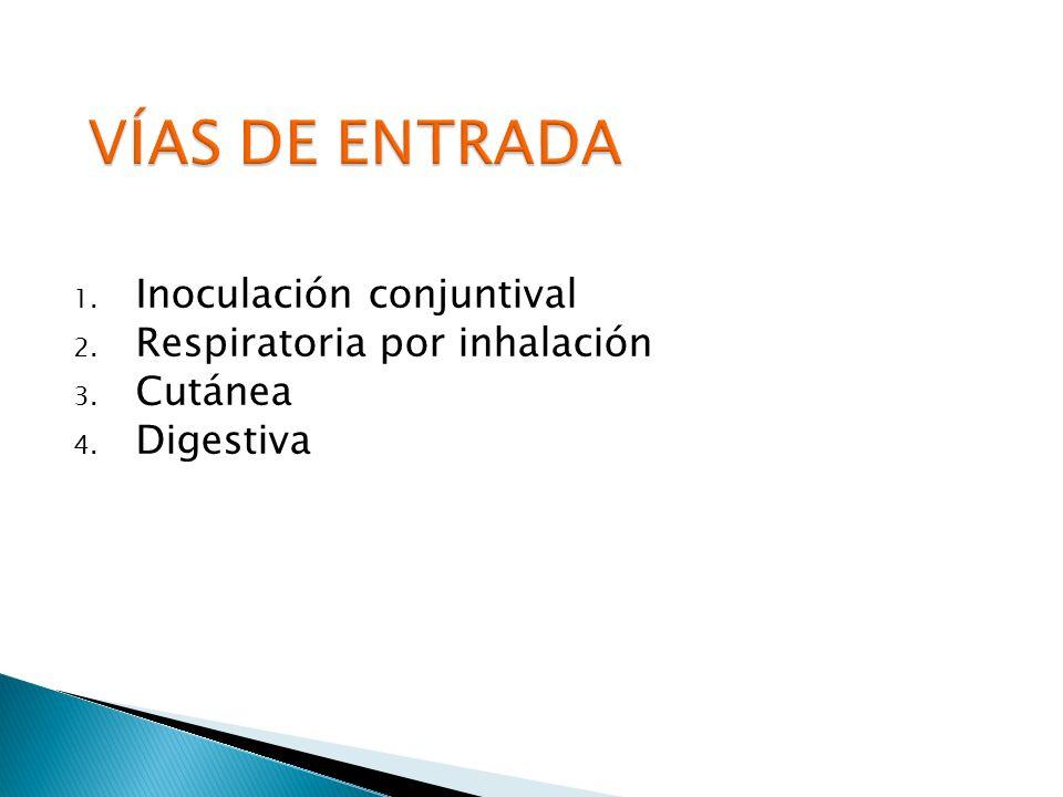 1. Inoculación conjuntival 2. Respiratoria por inhalación 3. Cutánea 4. Digestiva