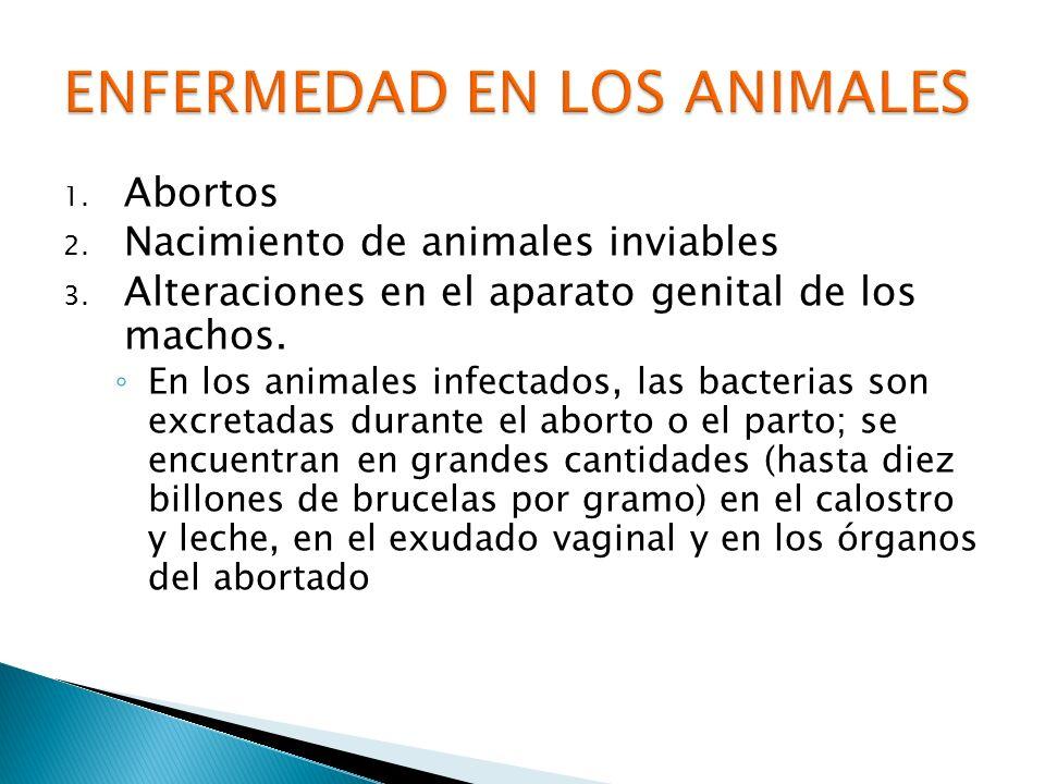1. Abortos 2. Nacimiento de animales inviables 3. Alteraciones en el aparato genital de los machos. En los animales infectados, las bacterias son excr