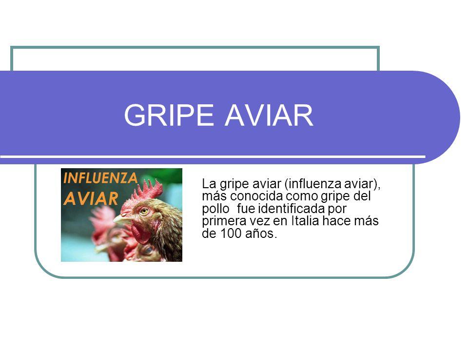 GRIPE AVIAR La gripe aviar (influenza aviar), más conocida como gripe del pollo fue identificada por primera vez en Italia hace más de 100 años.