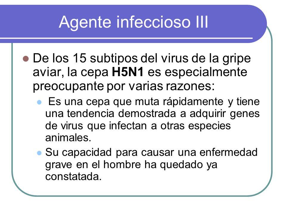 Agente infeccioso III De los 15 subtipos del virus de la gripe aviar, la cepa H5N1 es especialmente preocupante por varias razones: Es una cepa que mu