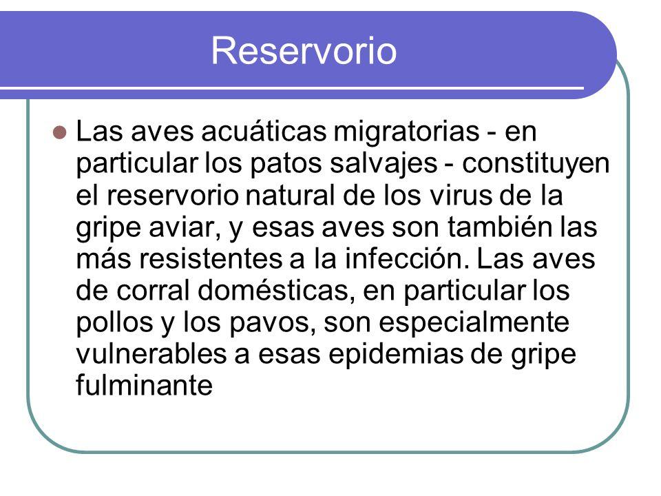 Reservorio Las aves acuáticas migratorias - en particular los patos salvajes - constituyen el reservorio natural de los virus de la gripe aviar, y esa