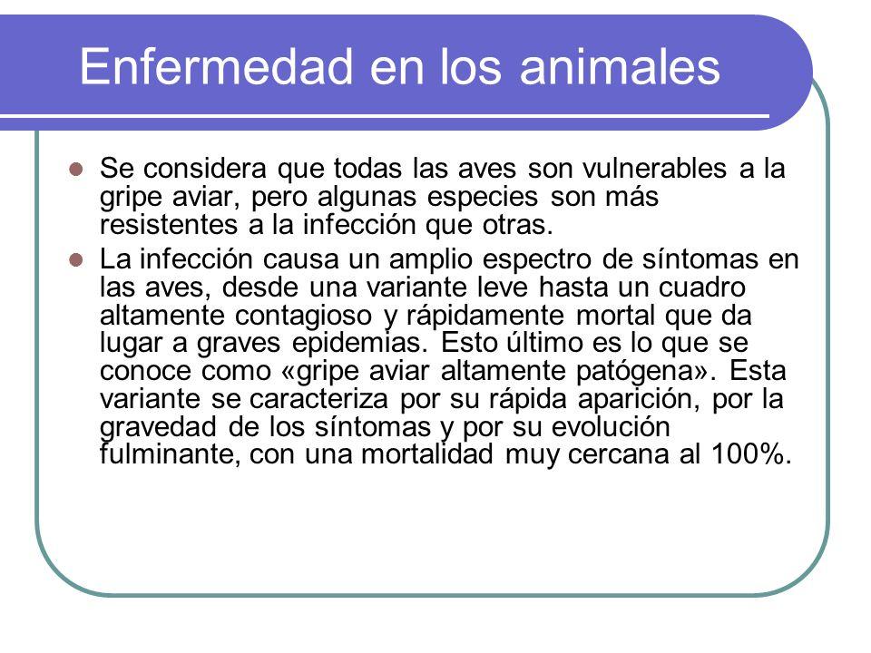 Enfermedad en los animales Se considera que todas las aves son vulnerables a la gripe aviar, pero algunas especies son más resistentes a la infección