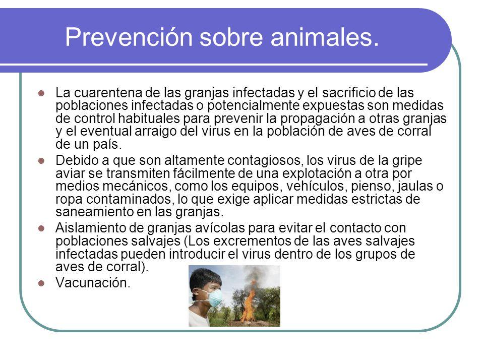 Prevención sobre animales. La cuarentena de las granjas infectadas y el sacrificio de las poblaciones infectadas o potencialmente expuestas son medida