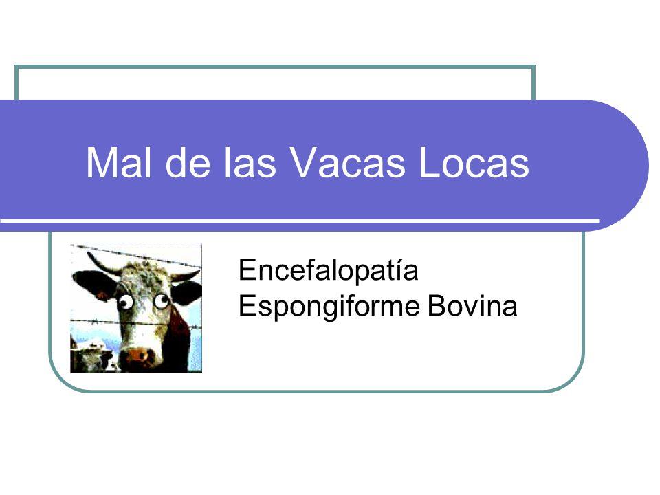 Mal de las Vacas Locas Encefalopatía Espongiforme Bovina
