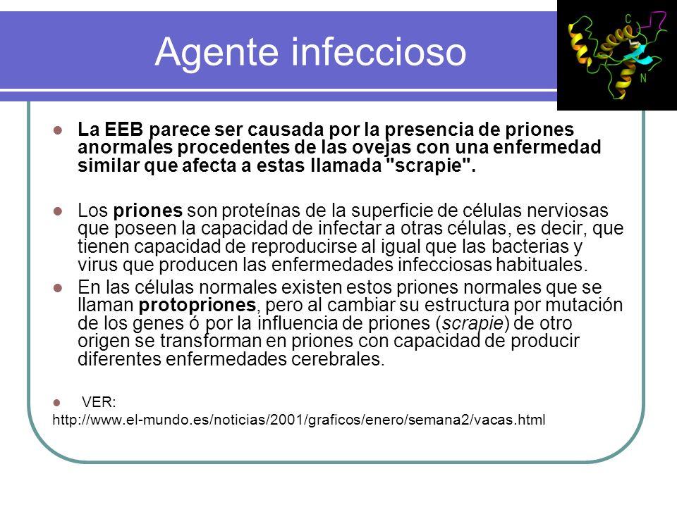 Agente infeccioso La EEB parece ser causada por la presencia de priones anormales procedentes de las ovejas con una enfermedad similar que afecta a es