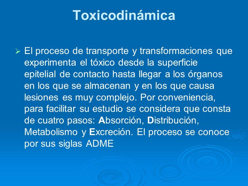 Toxicodinámica El proceso de transporte y transformaciones que experimenta el tóxico desde la superficie epitelial de contacto hasta llegar a los órga