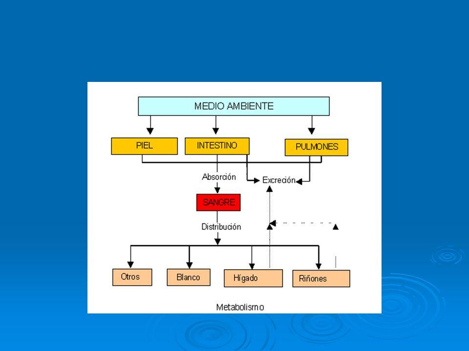 Absorción La absorción de un tóxico se define como el proceso por medio del cual éste atraviesa piel y/o mucosas hasta llegar al torrente sanguíneo.