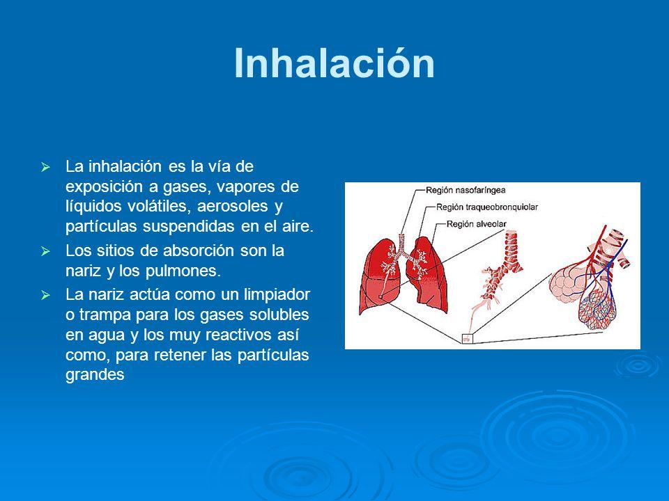 Inhalación La inhalación es la vía de exposición a gases, vapores de líquidos volátiles, aerosoles y partículas suspendidas en el aire. Los sitios de