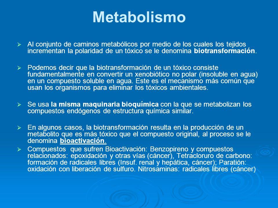 Metabolismo Al conjunto de caminos metabólicos por medio de los cuales los tejidos incrementan la polaridad de un tóxico se le denomina biotransformac