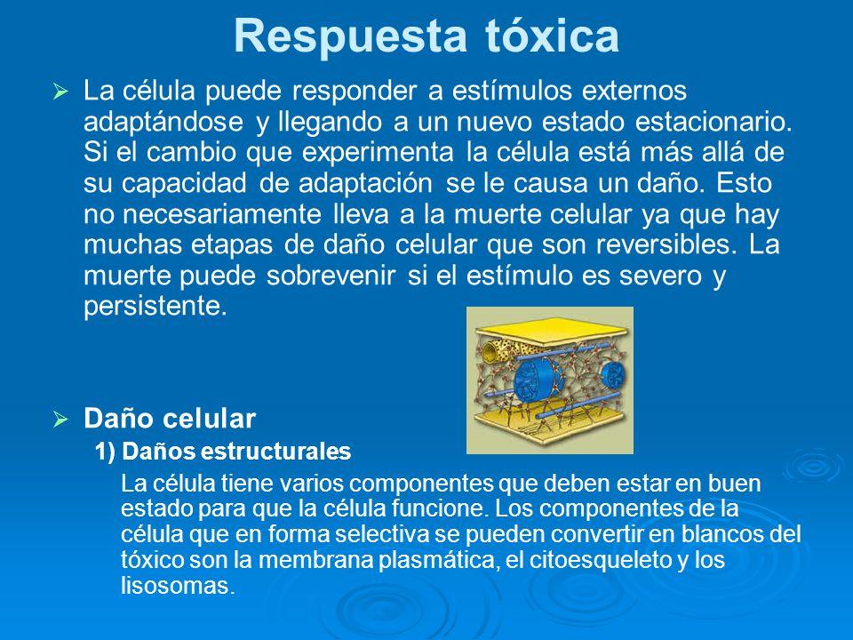 Respuesta tóxica La célula puede responder a estímulos externos adaptándose y llegando a un nuevo estado estacionario. Si el cambio que experimenta la