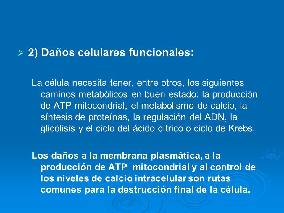 2) Daños celulares funcionales: La célula necesita tener, entre otros, los siguientes caminos metabólicos en buen estado: la producción de ATP mitocon