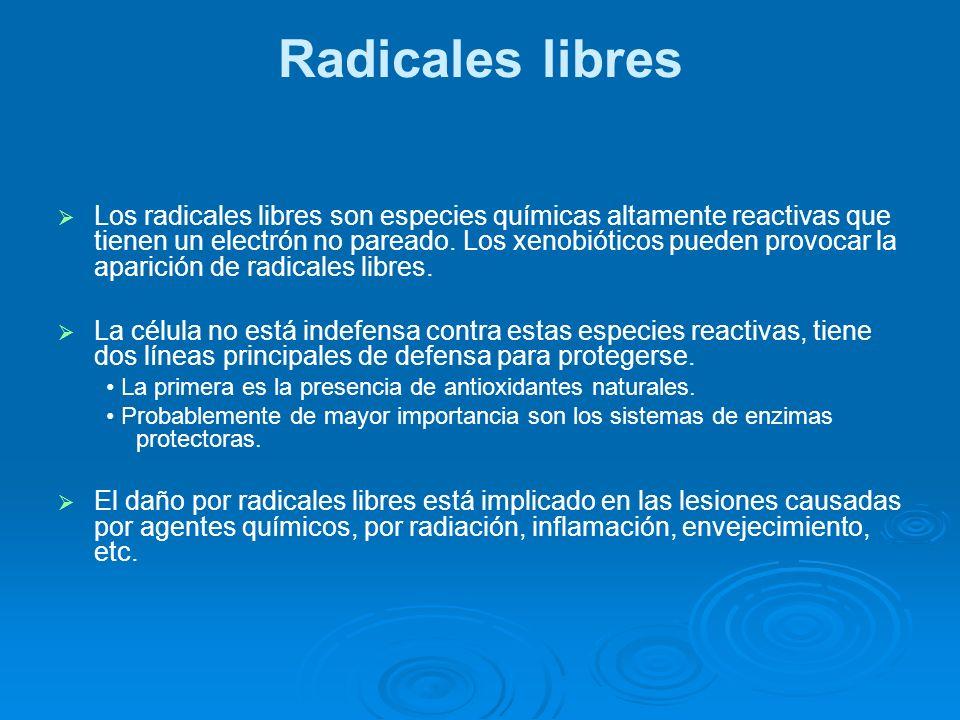 Radicales libres Los radicales libres son especies químicas altamente reactivas que tienen un electrón no pareado. Los xenobióticos pueden provocar la