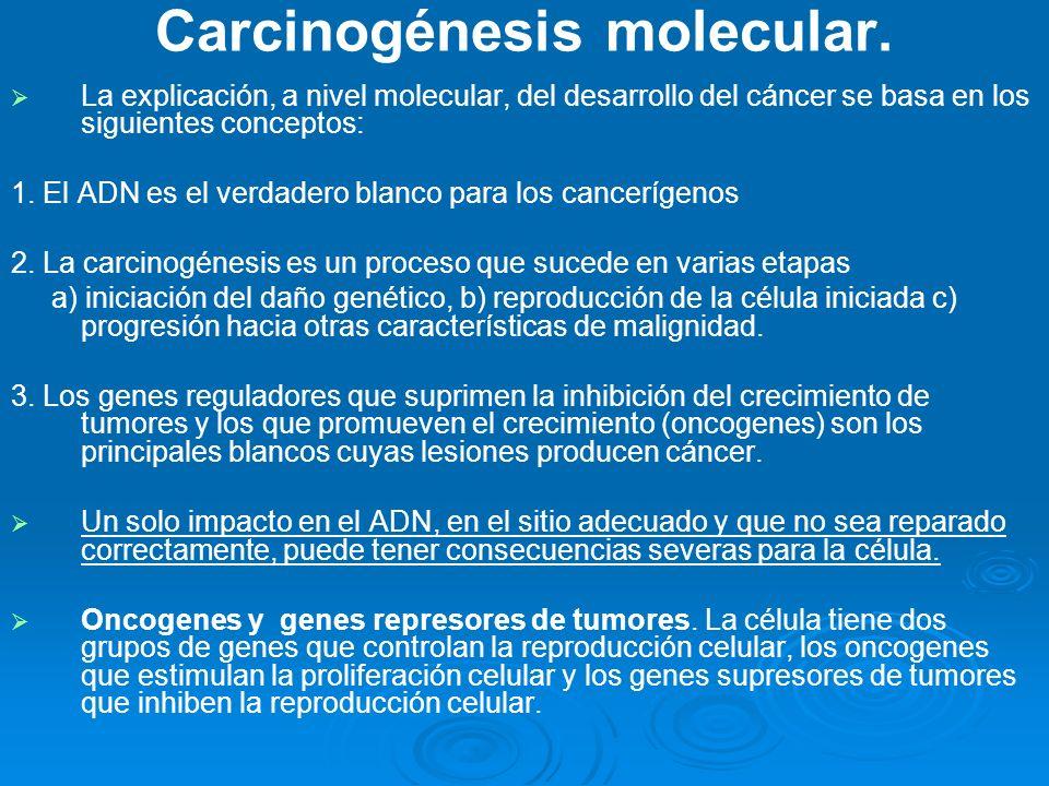 Carcinogénesis molecular. La explicación, a nivel molecular, del desarrollo del cáncer se basa en los siguientes conceptos: 1. El ADN es el verdadero