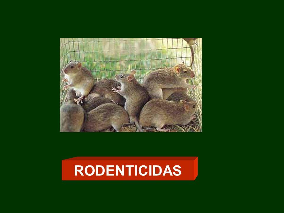 RODENTICIDAS