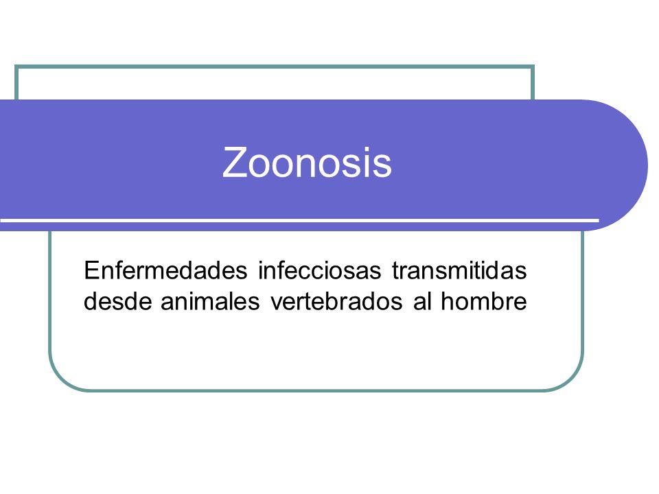 Clasificación Según el ciclo evolutivo del agente causal, se distinguen: Ortozoonosis o zoonosis directas: la transmisión tiene lugar a partir directamente del animal infectado por contacto directo o indirecto (fómites, aguas o alimentos contaminados).