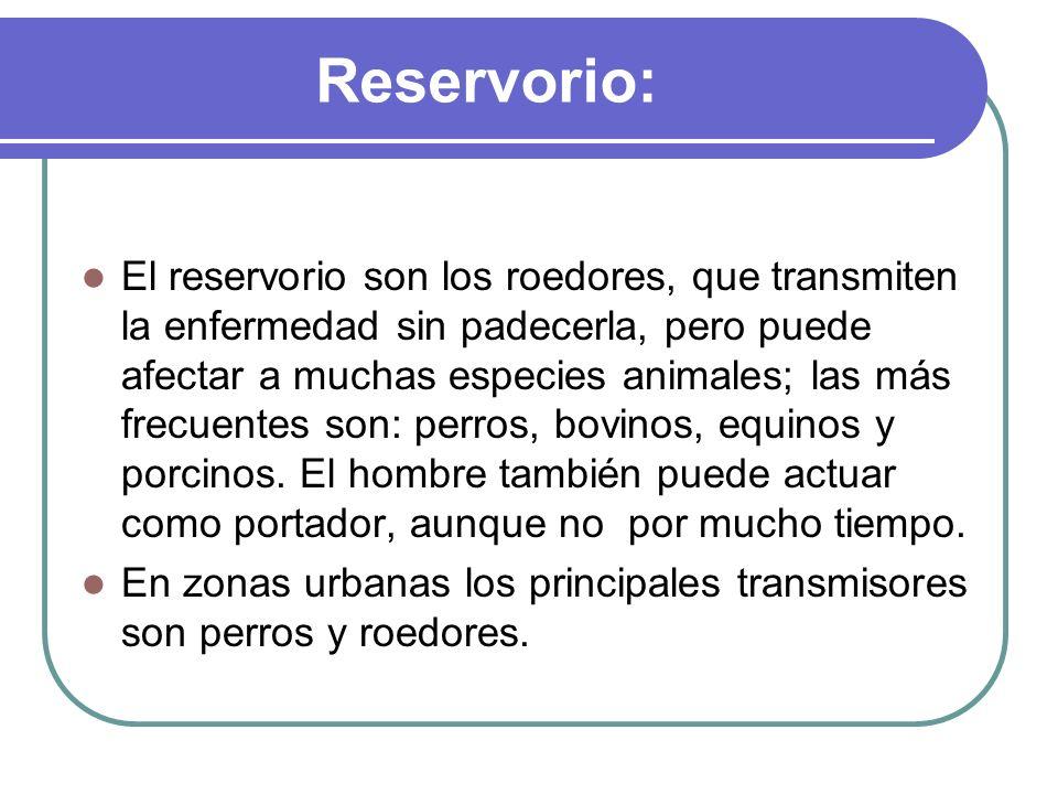 Reservorio: El reservorio son los roedores, que transmiten la enfermedad sin padecerla, pero puede afectar a muchas especies animales; las más frecuen