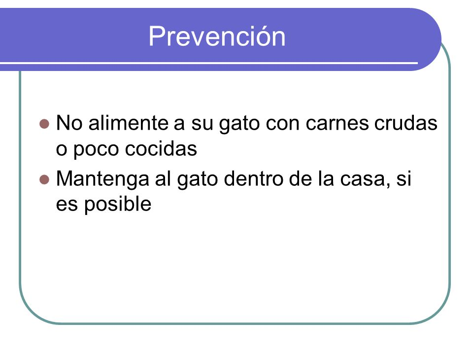 Prevención No alimente a su gato con carnes crudas o poco cocidas Mantenga al gato dentro de la casa, si es posible