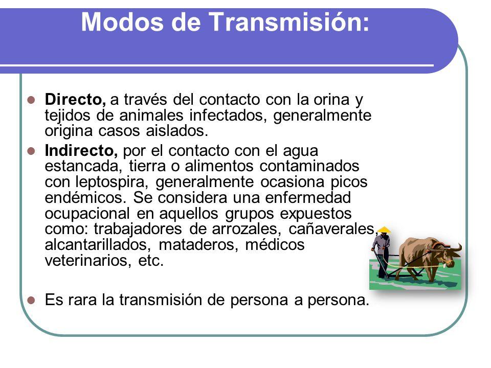 Modos de Transmisión: Directo, a través del contacto con la orina y tejidos de animales infectados, generalmente origina casos aislados. Indirecto, po