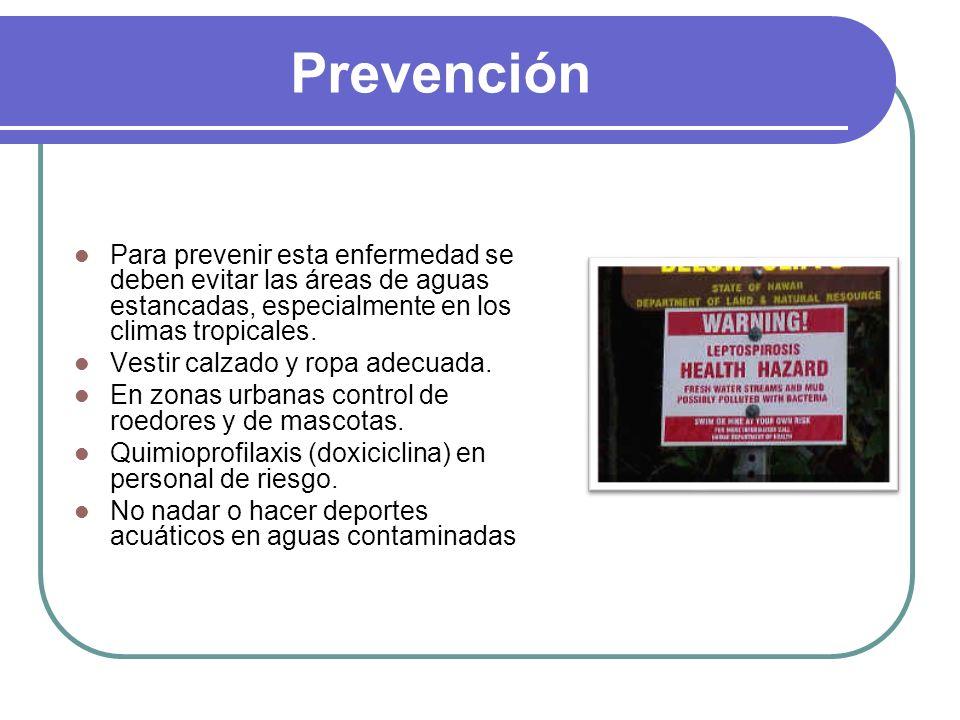 Prevención Para prevenir esta enfermedad se deben evitar las áreas de aguas estancadas, especialmente en los climas tropicales. Vestir calzado y ropa