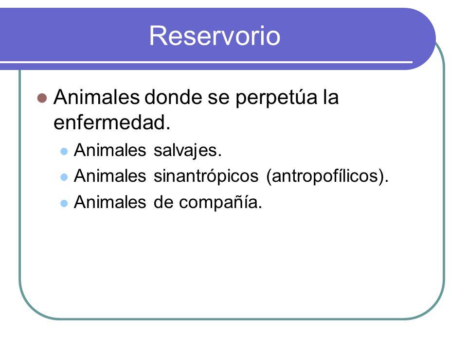 Reservorio Animales donde se perpetúa la enfermedad. Animales salvajes. Animales sinantrópicos (antropofílicos). Animales de compañía.