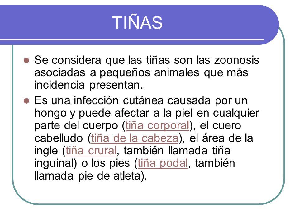 Se considera que las tiñas son las zoonosis asociadas a pequeños animales que más incidencia presentan. Es una infección cutánea causada por un hongo