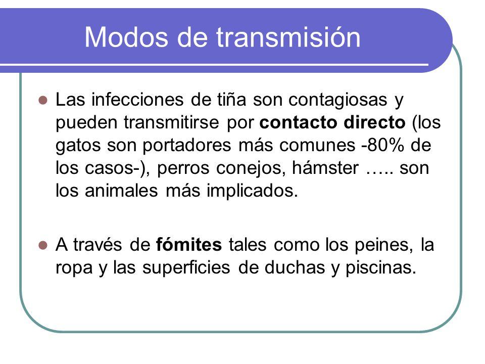 Modos de transmisión Las infecciones de tiña son contagiosas y pueden transmitirse por contacto directo (los gatos son portadores más comunes -80% de