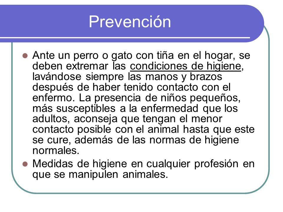 Prevención Ante un perro o gato con tiña en el hogar, se deben extremar las condiciones de higiene, lavándose siempre las manos y brazos después de ha