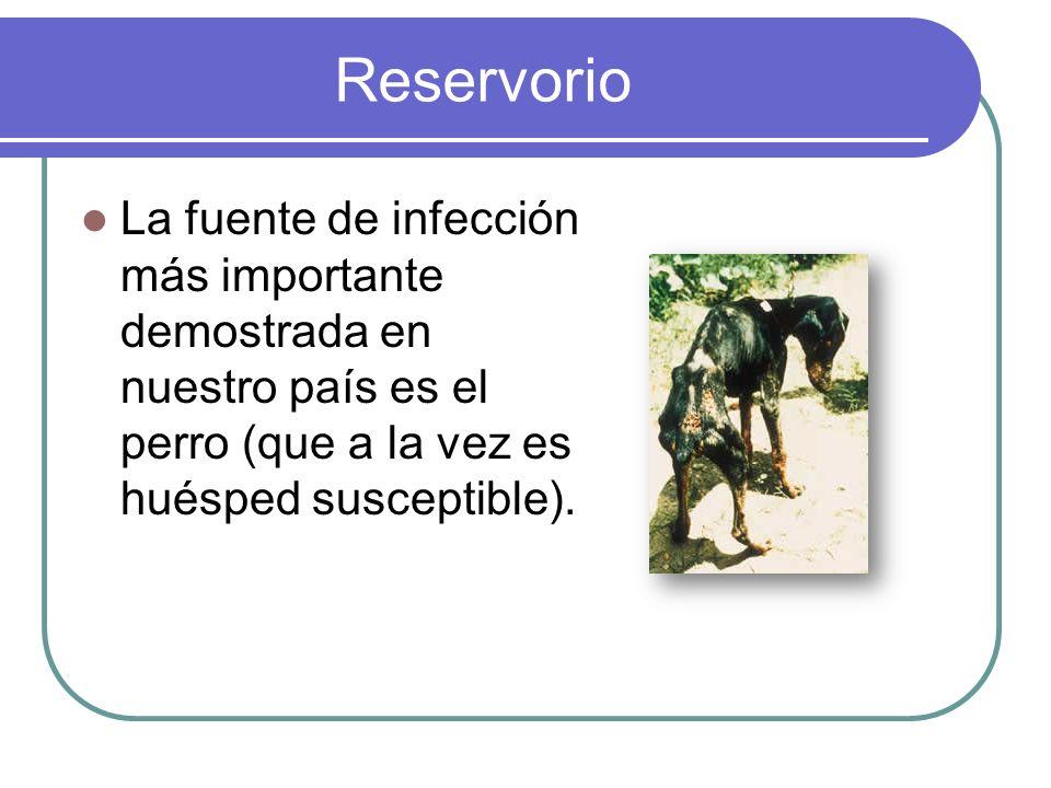 Reservorio La fuente de infección más importante demostrada en nuestro país es el perro (que a la vez es huésped susceptible).
