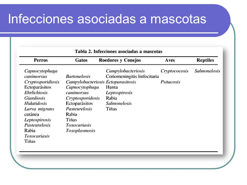 Enfermedad en los animales Los principales aparatos afectados son el respiratorio y el digestivo.