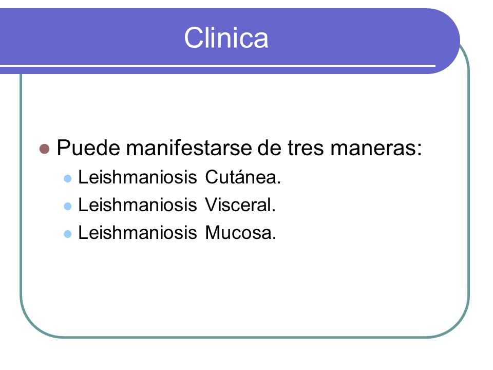 Clinica Puede manifestarse de tres maneras: Leishmaniosis Cutánea. Leishmaniosis Visceral. Leishmaniosis Mucosa.