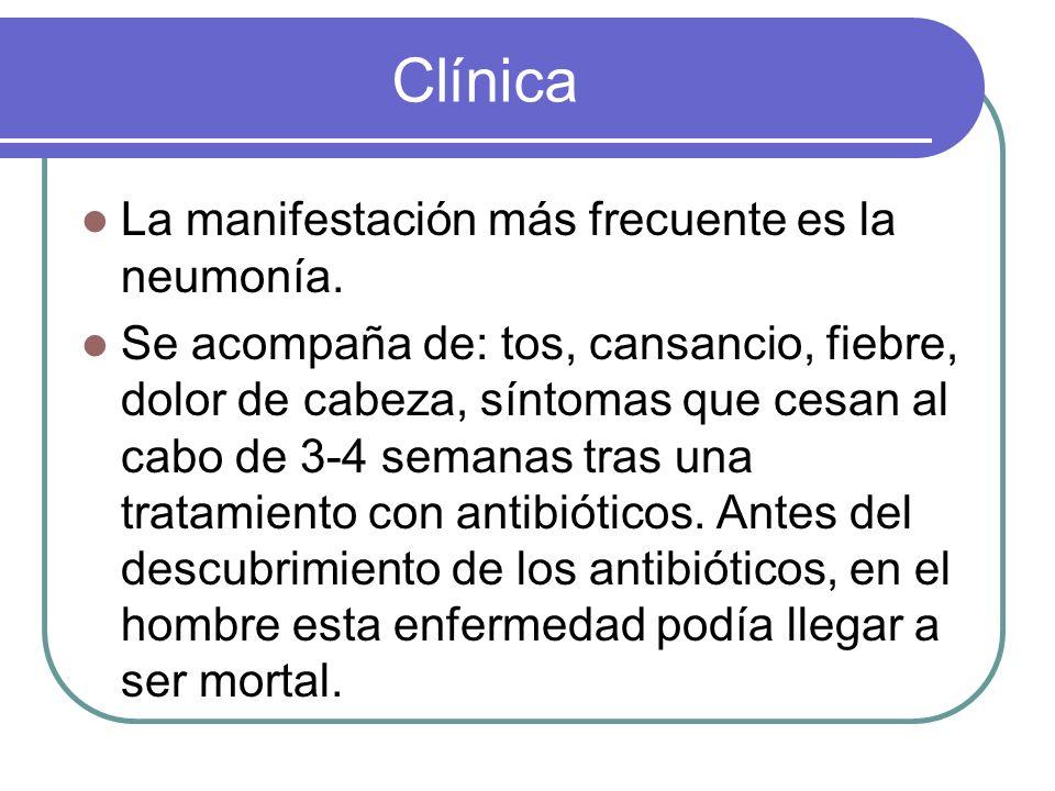 Clínica La manifestación más frecuente es la neumonía. Se acompaña de: tos, cansancio, fiebre, dolor de cabeza, síntomas que cesan al cabo de 3-4 sema