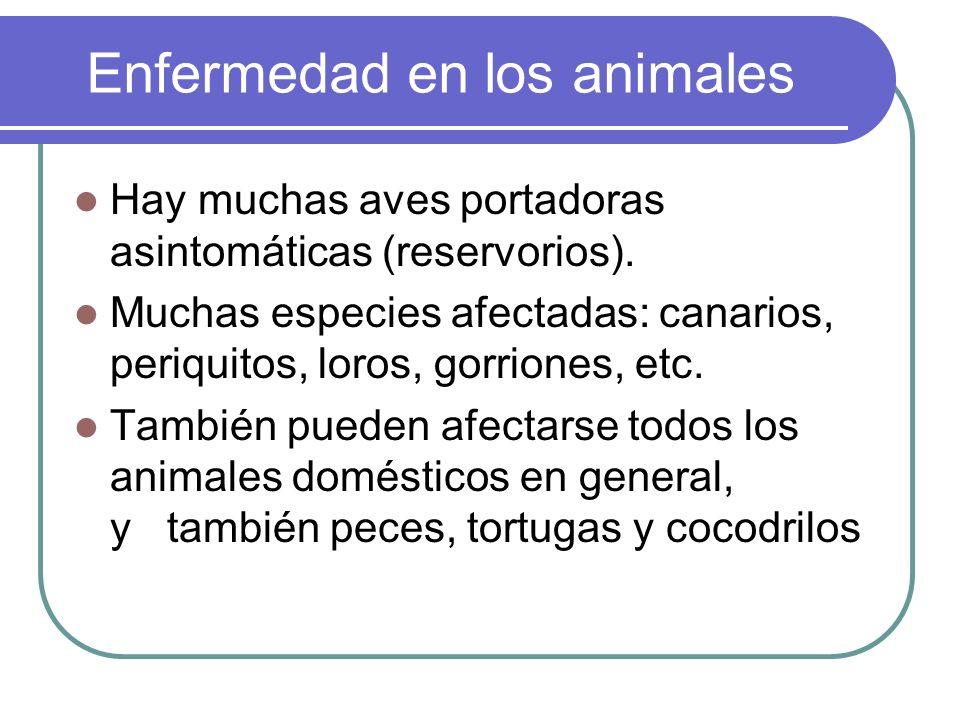 Enfermedad en los animales Hay muchas aves portadoras asintomáticas (reservorios). Muchas especies afectadas: canarios, periquitos, loros, gorriones,
