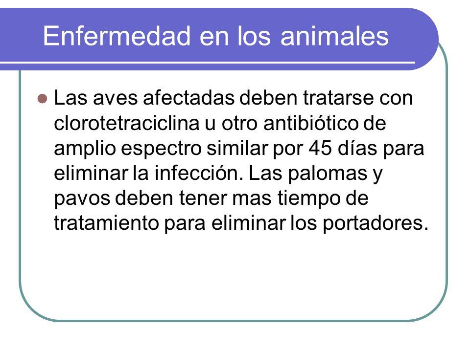 Enfermedad en los animales Las aves afectadas deben tratarse con clorotetraciclina u otro antibiótico de amplio espectro similar por 45 días para elim