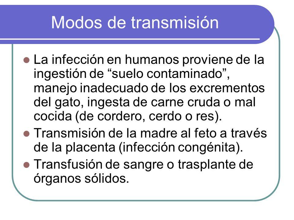 Modos de transmisión La infección en humanos proviene de la ingestión de suelo contaminado, manejo inadecuado de los excrementos del gato, ingesta de