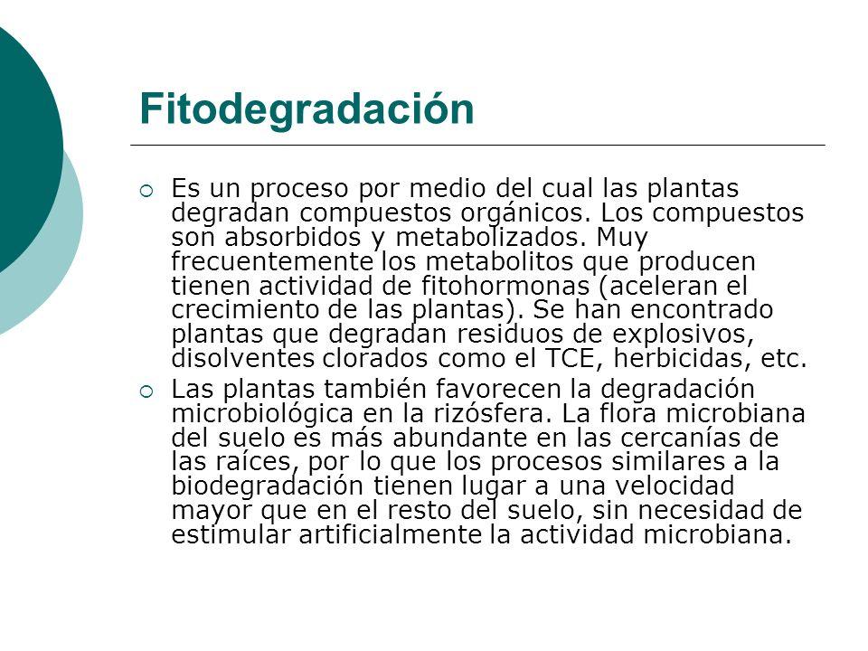 Fitodegradación Es un proceso por medio del cual las plantas degradan compuestos orgánicos. Los compuestos son absorbidos y metabolizados. Muy frecuen