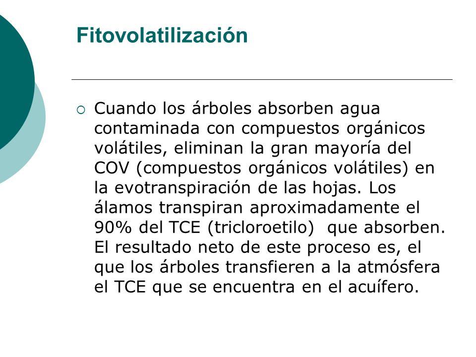 Fitovolatilización Cuando los árboles absorben agua contaminada con compuestos orgánicos volátiles, eliminan la gran mayoría del COV (compuestos orgán