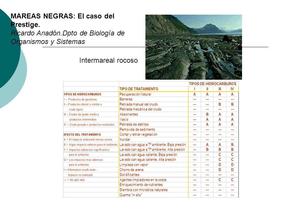 Intermareal rocoso MAREAS NEGRAS: El caso del Prestige. Ricardo Anadón.Dpto de Biología de Organismos y Sistemas