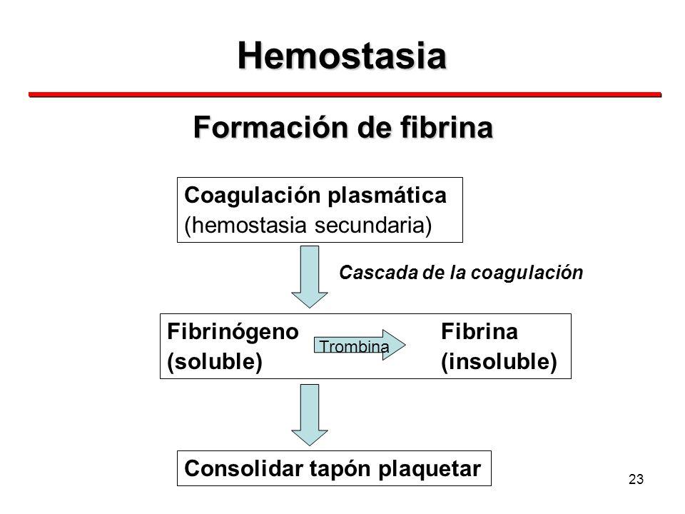23 Hemostasia Formación de fibrina Coagulación plasmática (hemostasia secundaria) FibrinógenoFibrina (soluble)(insoluble) Trombina Consolidar tapón pl